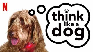 Think Like a Dog 2020